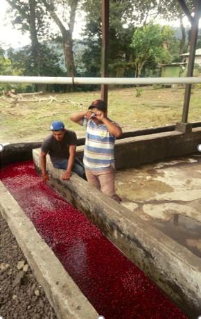 Proceso de lavado de café Colibrí Azul