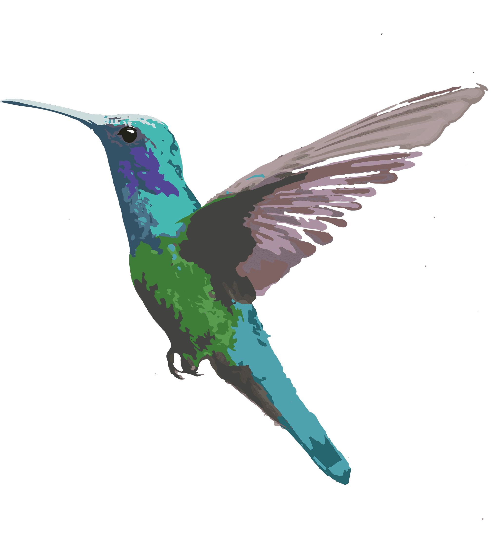 colibrí azul, imagen del café de especialidad Colibrí azul